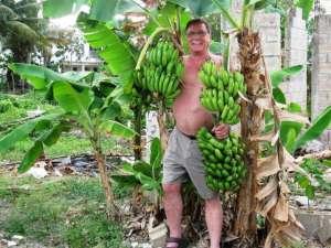 Banana Larry In Paradise