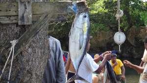 Cabrera Dominican Republic Fishing