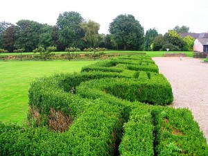 How are you going to navigate through the maze of hedges that are currently blocking your viewof things to come?