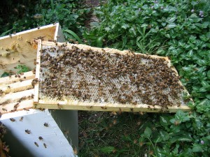 Raising bees does not require a lot of land. It's inexpensive and just may be an excellent way of making a living.