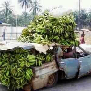 Plantano Power!! Don't worry the car passed inspection.