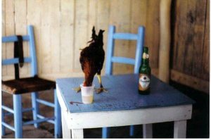 The freedom to live as you please. No the rooster didn't get asked for I/D or even carded.