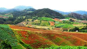 Endless Mountain Farms In Constanza